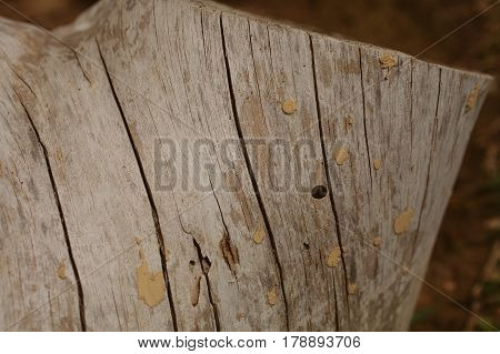 Tree trunk background and texture. Wood texture of cut tree trunk. Closeup view of old wood texture. Abstract texture and background for designers. Macro wooden background.