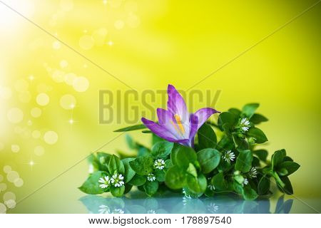 Bunch of flowers with crocuses on an abstract background