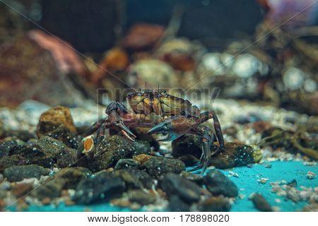 Hermit crab in the aquarium close up