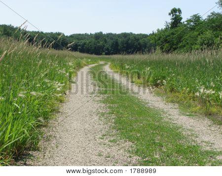 Lane In The Marsh Land