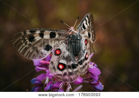 Butterfly on the color with red spots on wings volatile