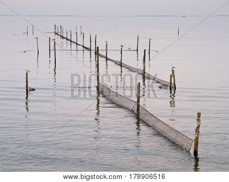 Nets In The Water