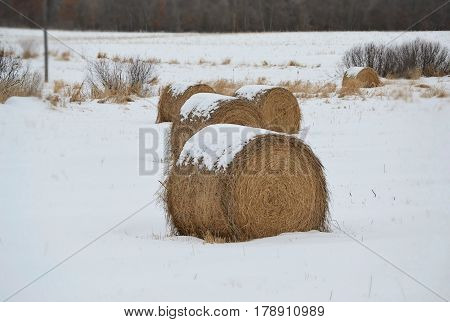 Bails of hay in a snowy field