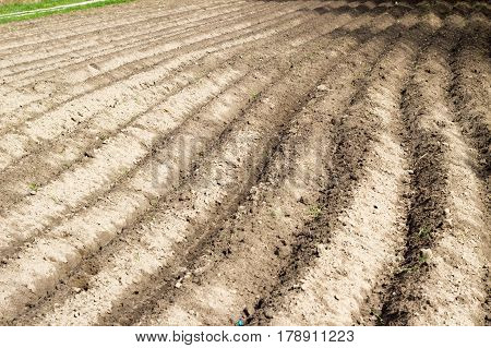 Agricultural Ploughed Field And Soil In Spring Perspective View Background Of Natural Beautiful Line