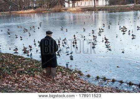 Old Man Feeding Ducks On A Lake In Winter Or Autumn