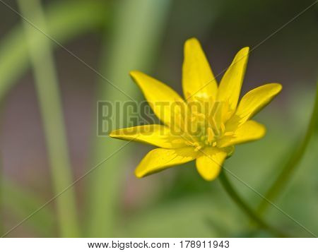 A Yellow Flower In Spring