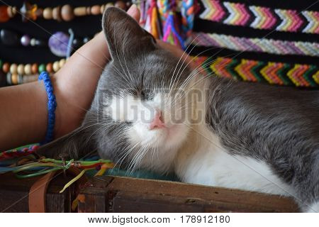 Person with a blue rosary on the hand cuddle sleeping cat poster