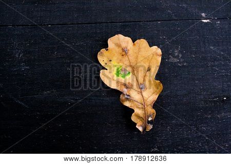 Old Dark Black Wooden Background Texture. Grungy Pattern And Yellow Autumn Fallen Leaf With Green Sp