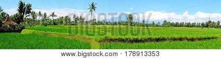 Panorama from rice field landscape on Java island, Indonesia
