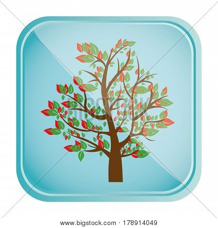 colorful square frame and blue background with spring tree with leafy branches vector illustration