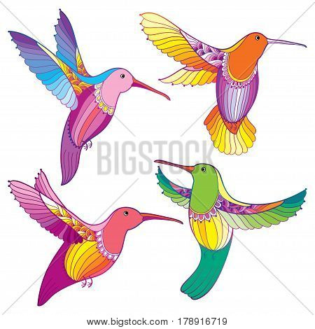 Vector set with flying colorful Hummingbird or Colibri in contour style isolated on white background. Outline small tropical bird with ornate wings for summer and exotic design.