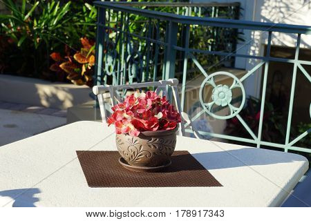 Red silk flowers in a flower pot placed on a sunny table