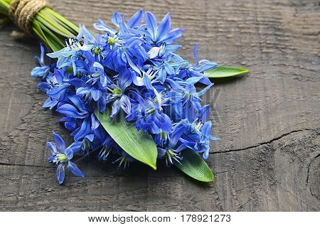 Blue Scilla flowers (Scilla siberica, Squill) on old wooden background. Bouquet of blue snowdrops. First spring flowers. Springtime or spring holidays concept. Copy space. Selective focus.