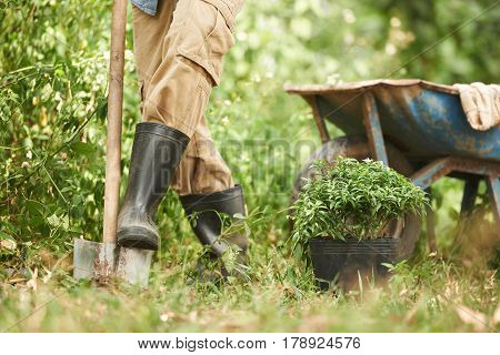 Farmer digging in soil to prepare garden for planting