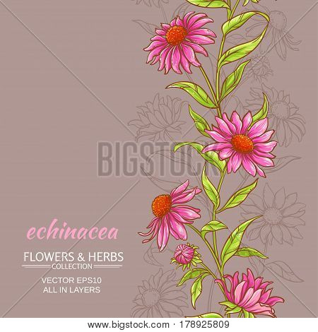 echinace purpurea vector pattern on color background