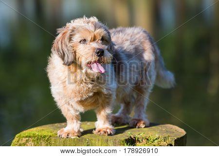 Portrait Of A Cute Older Dog On A Tree Stub