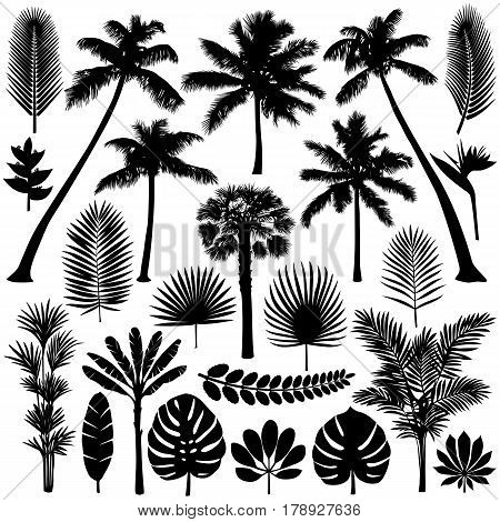 Vector illustrations silhouette of palm trees, leaves and flowers. Tropical collection isolated on white background.