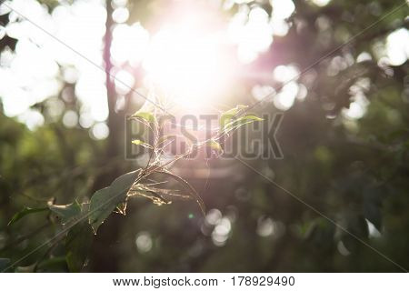 Young growth leave green in the forest with sun flare