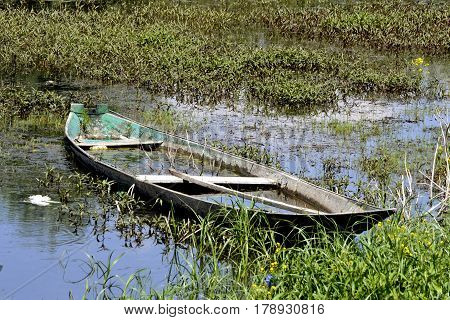 Rowboat submerged in the lake water, between the rich coastal vegetation