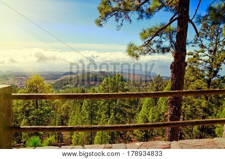 Beautiful view of El Teide National park. Pine forest summer or spring landscape. Tenerife Canary Islands Spain.