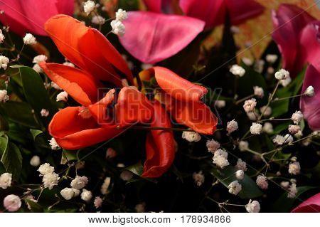 flower bouquet, garden design, flower border, flower pattern, flowers isolated