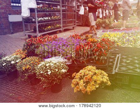 Beautiful Colorful Flowers Street