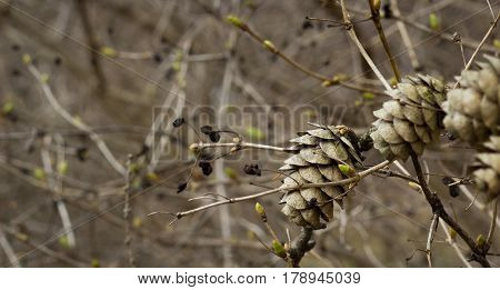Forest background bumps grow on a thin branch spring has changed the winter nature has played more vivid colors everything starts to blossom there are the first sprouts