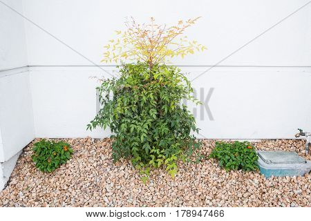 Green plant garden on white cement wall