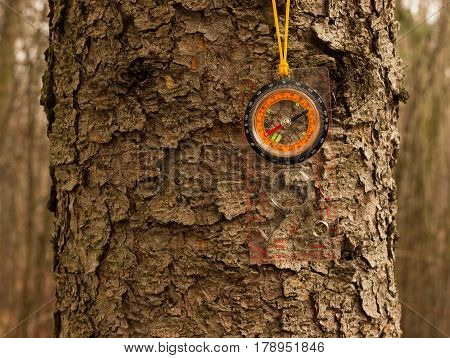 Device for determining the direction of a bright compass hanging on a tree on a yellow rope the necessary thing for treks in the woodland will show the way if you get lost