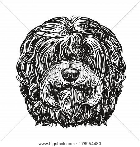 Hand drawn portrait lapdog. Dog, pet, animal sketch. Vintage vector illustration isolated on white background
