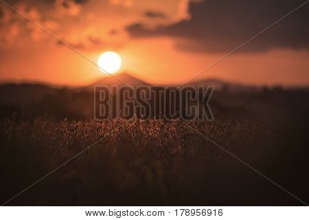 Soybean plantation in Campo Magro. Campo Magro in the Metropolitan Region of Curitiba is located to the northwest of the Region. City of the State of Paraná Brazil.