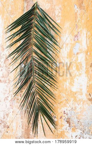 Palm branch on old vintage antique orange wall as Palm sunday and Easter christian holiday concept and Jerusalem background