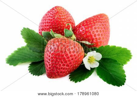 Strawberries organic plant with leaves and flower on white
