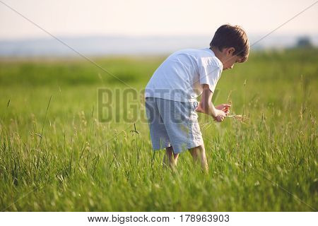 boy in the field at sunny summer morning. boy in white t-shirt Collects a bouquet of wildflowers. The family travels, the children happily ran around the field