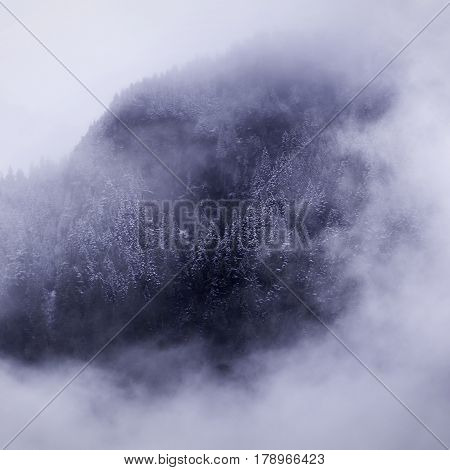 Squared view of snow covered fir trees though an opening in the thick haze and clouds surrounding the side of a mountain just outside of Hope, British Columbia