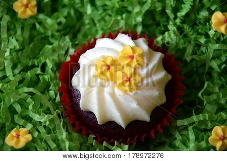 Muffins decorated with yellow flowers on green background. Spring Mother's day Valentine's day concept. Homemade cupcake with whipped cream and yellow spring flower on green grass background.