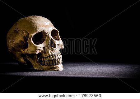 skull in the dark on the background