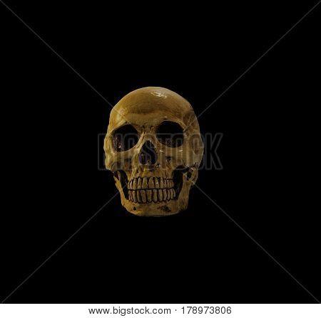 skull , skull on the black background