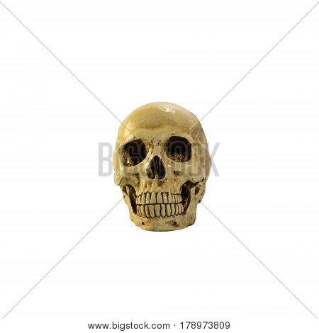 skull , skull on the white background