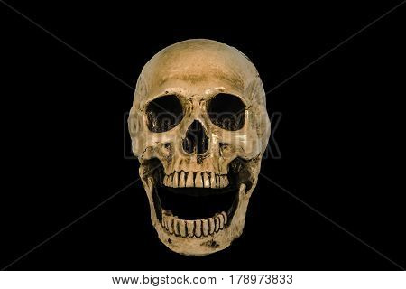 skull , skull on the black background