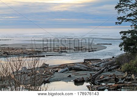 Driftwood Logs Covering a Beach with the ocean in the background