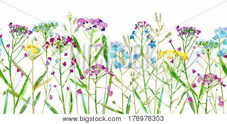 Floral seamless border of a wild flowers and herbs on a white background.Forget-me-not, vetch,timothy grass,spike. Watercolor hand drawn illustration.