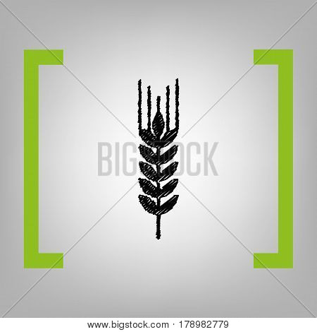 Wheat sign illustration. Spike. Spica. Vector. Black scribble icon in citron brackets on grayish background.