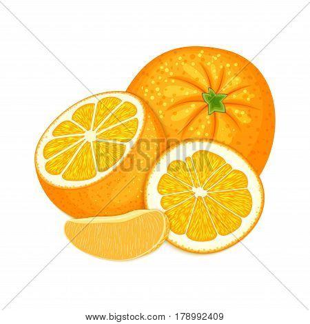 Vector composition of a citrus orange fruits. Mandarin whole and cut . Group of tasty ripe tropical orange fruit, designer elements for packaging juice breakfast health food, tea