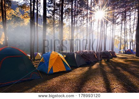 Camping and tent under the pine forest in sunset at Pang-ung, pine forest park , Mae Hong Son, North of Thailand