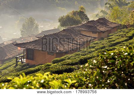 Morning mist at  Ban Rak Thai , a popular tourist attraction . Mae Hong Son province, North of Thailand .
