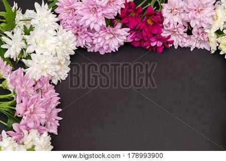 colorful chrysanthemum isolated on a black background