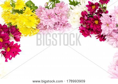 colorful chrysanthemum isolated on a white background