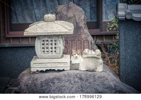 Cat In A Japanese Shrine