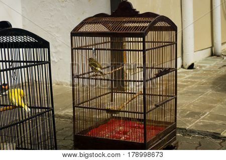 Bird sunbathing in cage with food and drink photo taken in Jakarta Indonesia java